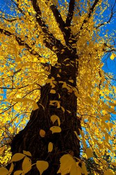 Aspen, Colorado photo via dan