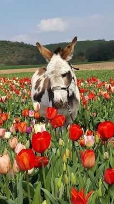 My favourite animal and my favourite flower