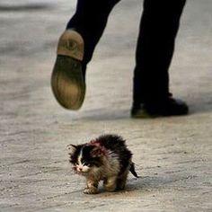 Sem serem vistos, eles sofrem... Sem serem escutados, eles choram... Em agonia, eles persistem... Em solidão, eles morrem. Ajude um animalzinho de rua! A única esperança deles somos nós!