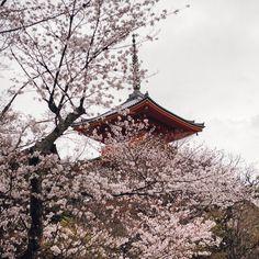 2016.4.3   New web site open  http://www.kiyomizudera.or.jp/en/  #kyoto #kiyomizudera #temple #japan#new#website#open#2016#清水寺#京都#日本#桜 by feel_kiyomizudera