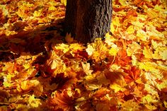 Autumn Carpet by Linda Edgecomb,