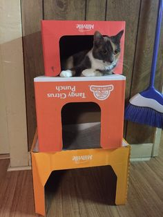 Aldi makes cat apartments now   http://ift.tt/2eo7dI4 via /r/cats http://ift.tt/2eM2NxC  cats funny pictures
