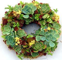 succulent wreath  #succulents