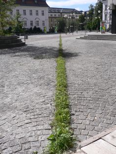 Lois Weinberger - Cut, Spontanvegetation, 100 m, Universität Innsbruck 1999 / http://www.loisweinberger.net