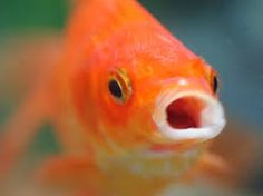 animal captions Seize the Carp - Funny Animal Memes and GIFs that are pure comedy gold. Animal Captions, Funny Animal Photos, Funny Meme Pictures, Funny Captions, Funny Animal Memes, Funny Animals, Funny Babies, Funny Dogs, Taehyung