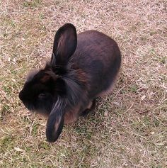Is my Rabbit Happy? The tell-tale signs
