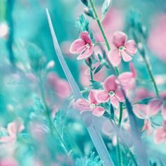 135 Best Pink And Turquoise Images Pastel Colors Beautiful Things