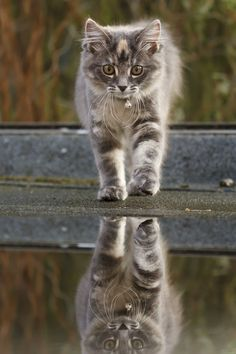 """magicalnaturetour:  Photo """"Cat on a Hot Tin Roof II"""" by Roeselien Raimond ~ Happy Labor Day/Monday lovely friends :)"""