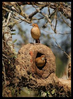 New Wild Bird Feeders Animals 25 Ideas Kinds Of Birds, All Birds, Love Birds, Exotic Birds, Colorful Birds, Pretty Birds, Beautiful Birds, Nester, Wild Bird Feeders