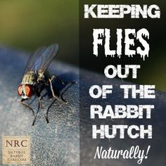 Keeping Flies Out of the Rabbit Hutch Naturally -Natural Rabbit Care