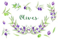 Watercolor Olive Clipart by Corner Croft on Creative Market?u=chengjing