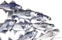 "Fish Print - Digital Print - Striped Bass- Fish Art - Pen and Ink Drawing Print 8.5"" x 11""- School of fish-  Men Decor - ""Old School"". $15.00, via Etsy."