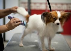 We've got the answers to frequently asked questions about dog grooming, like: Is it safe to blow-dry my dog, and how can I control my dog's shedding?