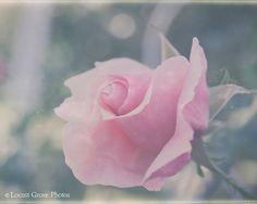 Flower Photography Vintage Rosebud by LocustGrovePhotos on Etsy