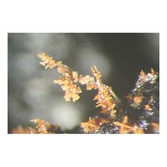 Oxyplumboroméite, Pb2Sb2O6O, Genna Zinc Smelter, Letmathe, North Rhine - Westphalia, Germany. Filigran oxyplumboromeite crystals like christmas tree on matrix