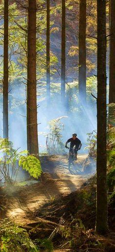 New Zealand, Whakarewarewa Forest is the perfect playground for mountain bikers