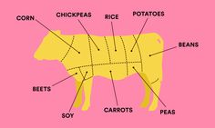 Meat, deconstructed  ideas.ted.com