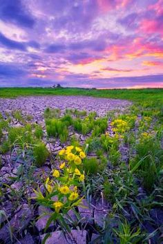North Dakota:  A hazy sunset and beautiful flowers -- a gorgeous view to end the day!