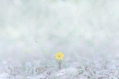 diligently (photography by Yukihiro Yoshida)