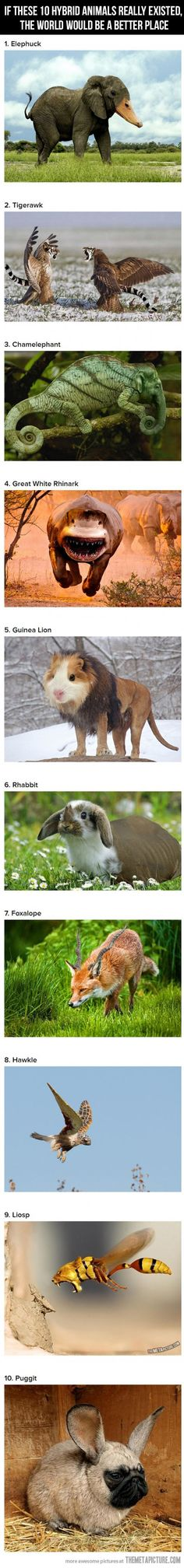 Evolution should make this happen…  I like the foxalope and the tigerawks the best :]. Please evolution, for christmas?