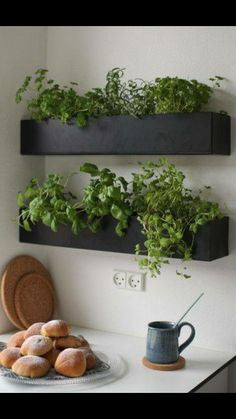 planter boxes for herbs (above sink)