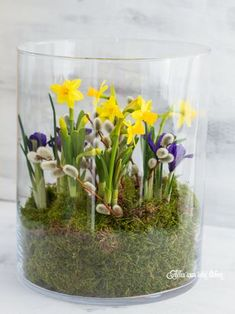 Frühling im Glas – schnelle Deko in 10 Minuten By Julia // 3 commentsF… Spring in the glass – quick decoration in 10 minutes By Julia // 3 comments Spring in the glass – quick decoration in 10 minutes Arrangements Ikebana, Floral Arrangements, Deco Floral, Arte Floral, Easter Flowers, Spring Flowers, Spring Decoration, Spring Bulbs, Glass Garden