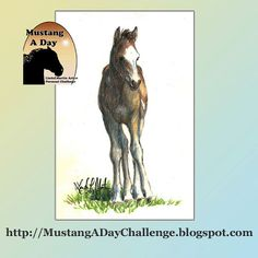 Mustang A Day Personal Challenge of LindaLMartin: Wren 2013 foal from Eagles Band of Sand Wash Basin HMA Challenge Image #413
