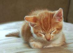 Sleeping Kitten by ~joyandsoul