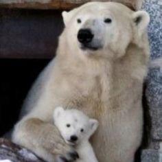 Ranua polar bear cub n mama