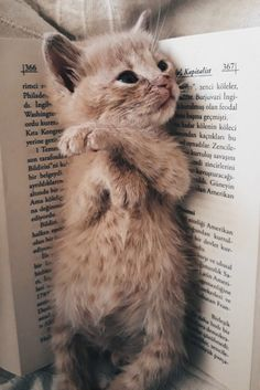 My Favourite Bookmark . - My Favourite Bookmark …. My Favourite Bookmark …. My Favourite Bookmark …. Kittens And Puppies, Cute Cats And Kittens, Kittens Cutest, Cute Puppies, Cute Dogs, Ragdoll Kittens, Tabby Cats, Bengal Cats, White Kittens