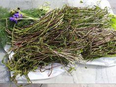 Herbs, Blog, Herb, Blogging, Medicinal Plants