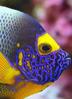 Beautiful Sea Creatures, Animals Beautiful, Cute Animals, Underwater Creatures, Ocean Creatures, Colorful Fish, Tropical Fish, Fish Under The Sea, Saltwater Tank