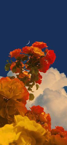 Vintage Flowers Wallpaper, Flower Iphone Wallpaper, Flowery Wallpaper, Iphone Background Wallpaper, Scenery Wallpaper, Tumblr Wallpaper, Colorful Wallpaper, Kawaii Wallpaper, Aesthetic Backgrounds