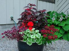Patio | Potted Plant Society