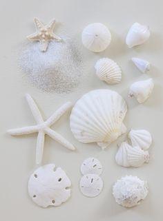 ⚓♡salt air⊰⛵ .Collectible shells.