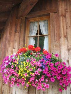 Window box- ventana con flores
