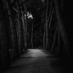 Dans Nature, Végétal, Arbre, forêt. Way, photographie de Dragan Marjanovic. Image #463713
