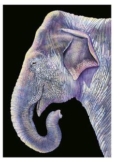 Tim Jeffs (American, b. 1965) Asian Elephant, 2015