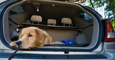 Do your routine road trips with your dog end-up with canine carsickness? Help prevent motion sickness in your pooch and have a pleasant car ride every time.