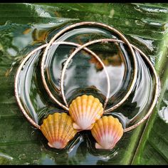 Sunrise Shell Bangles