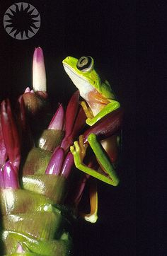 Frog by public.resource.org, via Flickr