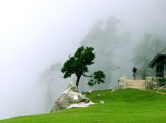 Cloudy Triund, above McleodGanj, HP, India