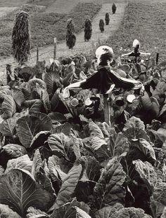 Martin Martinček - Kapustnisko-1963–1966 Fine Art Photo, Photo Art, Heart Of Europe, Eastern Europe, Natural History, Dark Art, Old Photos, In This Moment, Nature