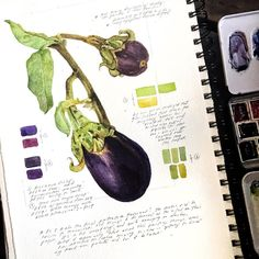 Is it weird to feel proud of a stubby eggplant? Making studies for a project / series I'm incredibly excitedpants about. (Also: First time using Fabriano CP; that one was for sure weird.)