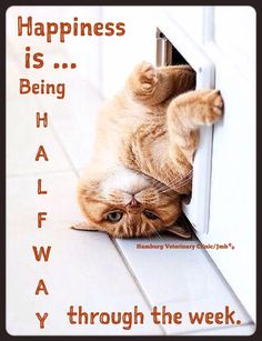 Funny Hump Day … Humor Happy Wednesday Memes to… – PinThis Funny Wednesday Quotes, Wednesday Humor, Wacky Wednesday, Wednesday Greetings, Happy Humpday Quotes, Hilarious Quotes, Hilarious Pictures, Wednesday Morning, Good Morning Funny
