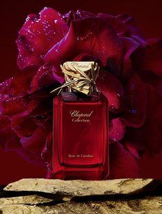 590de4755f5f 953 melhores imagens de Vidros de perfumes. em 2019 | Frascos de ...