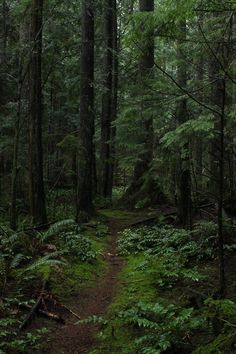 Gorgeous forest.  From  voiceofnature and forestland on Tumblr
