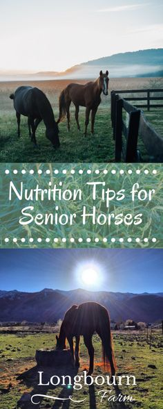 Having trouble keeping your senior horse in good condition? Get nutrition tips for senior horses in this article! Keep your aging horse healthy and happy!