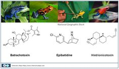 The Beautiful Color of Poison Dart Frogs - Chemistry Steps Chemistry Lessons, Poison Dart Frogs, Logos, How To Make, Beautiful, Coloring, Dart Frogs, Logo