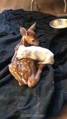 Cute Animal Videos, Cute Animal Pictures, Cute Videos, Cute Little Animals, Cute Funny Animals, Funny Dog Videos, Funny Dogs, Cute Puppies, Cute Dogs